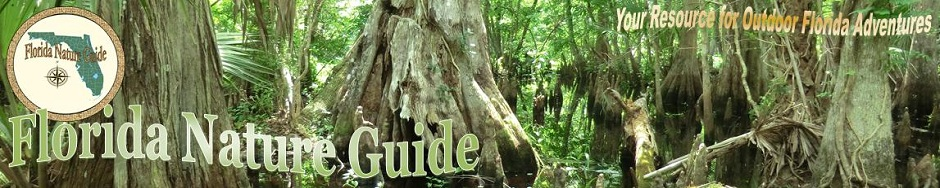 Florida Nature Guide
